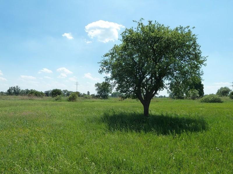 Naturschutzgebiet Goldau